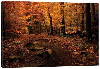 Autumn Path Canvas Art Print