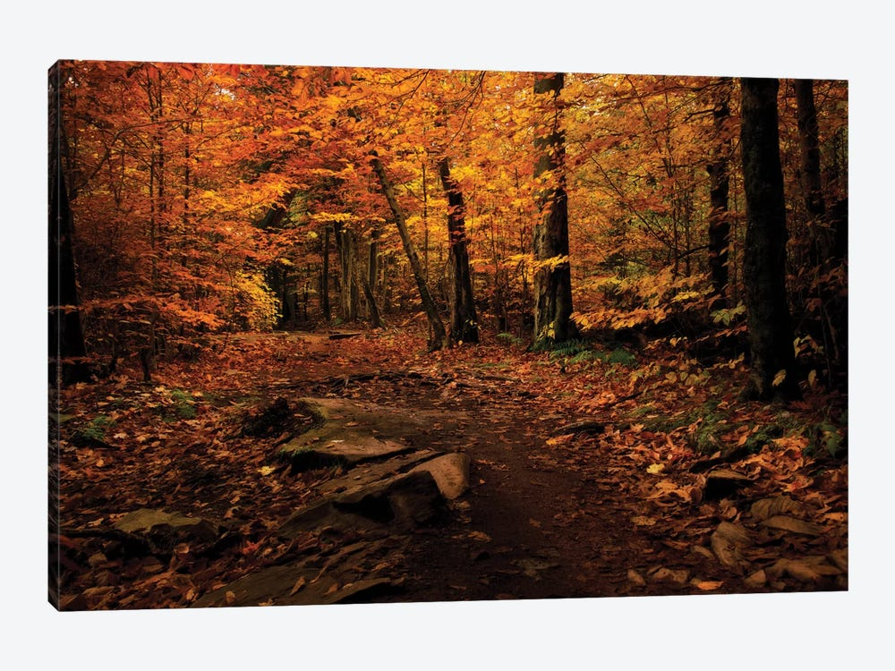 Autumn Path by Natalie Mikaels 1-piece Canvas Print