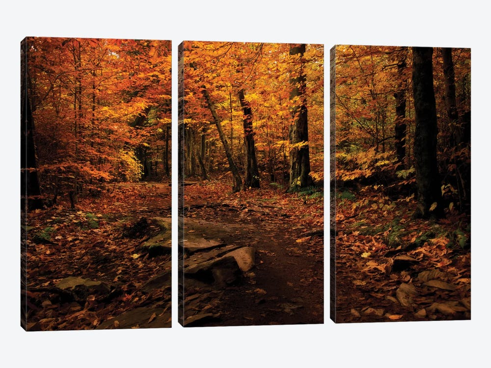 Autumn Path by Natalie Mikaels 3-piece Canvas Print