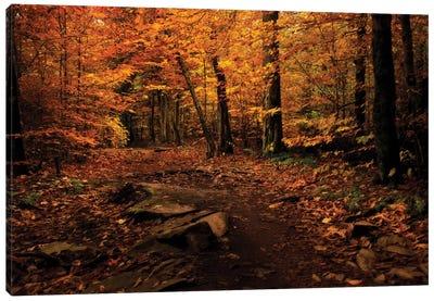 Autumn Path Canvas Art Print