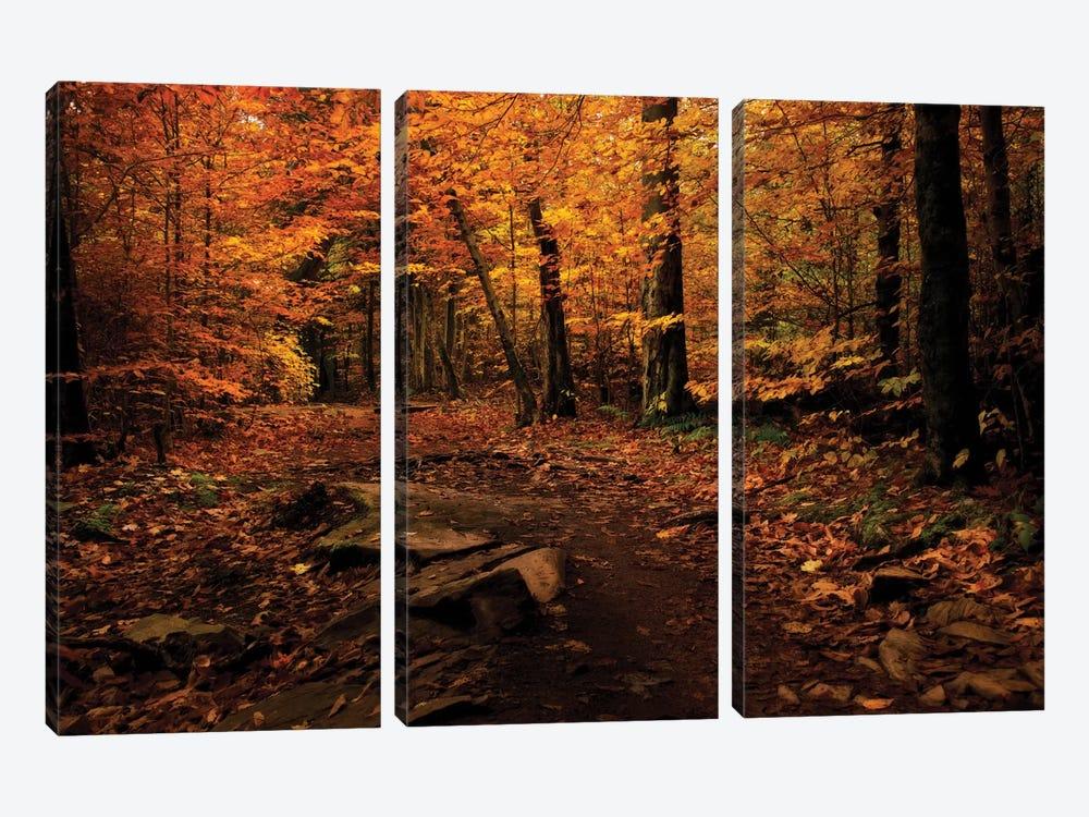 Autumn Path by Natalie Mikaels 3-piece Canvas Print