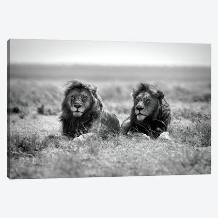 Two kings Canvas Print #NMR1} by Nicolas Merino Canvas Artwork
