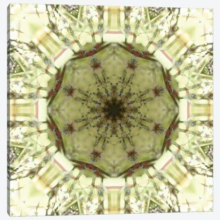 Colorful kaleidoscope. Canvas Print #NNA18} by Anna Miller Art Print