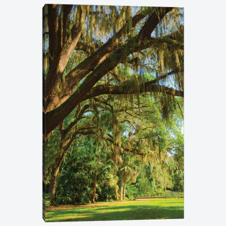 USA, Florida. Tropical garden with palm trees and living oak covered in Spanish moss. Canvas Print #NNA30} by Anna Miller Art Print