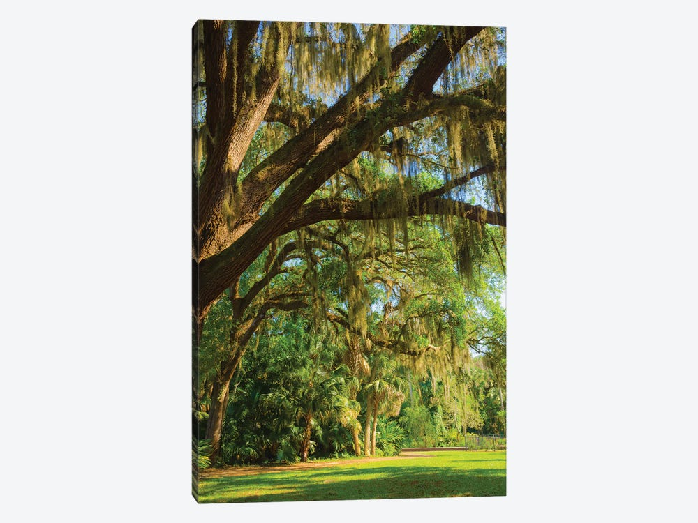 USA, Florida. Tropical garden with palm trees and living oak covered in Spanish moss. by Anna Miller 1-piece Canvas Artwork