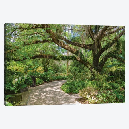 USA, Florida. Tropical garden with palm trees and living oak covered in Spanish moss. Canvas Print #NNA31} by Anna Miller Art Print