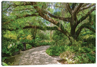 USA, Florida. Tropical garden with palm trees and living oak covered in Spanish moss. Canvas Art Print