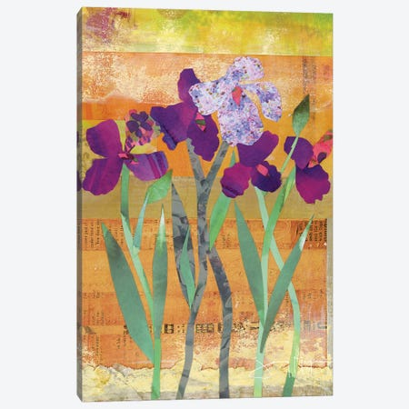 Iris III Canvas Print #NNM7} by Jenny McGee Canvas Wall Art