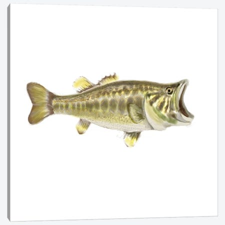 Illustrated Bass Canvas Print #NOV3} by Rick Novak Canvas Wall Art