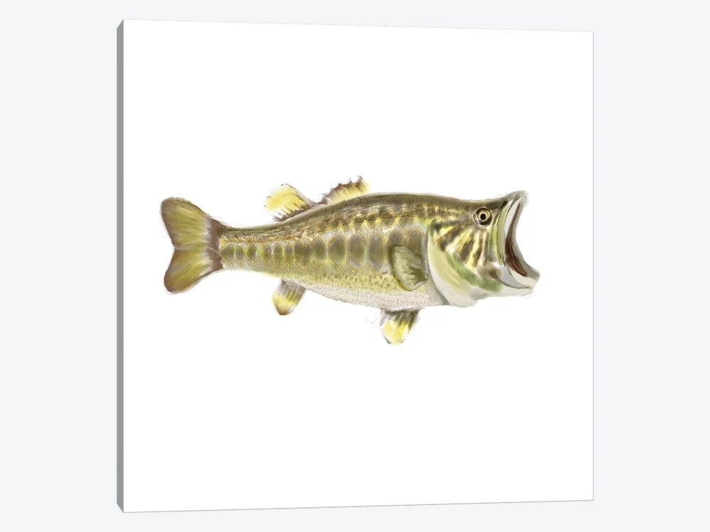Illustrated Bass by Rick Novak 1-piece Canvas Print