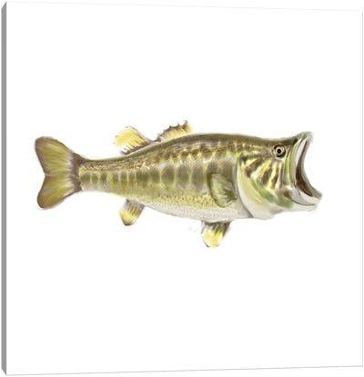 Illustrated Bass Canvas Art Print