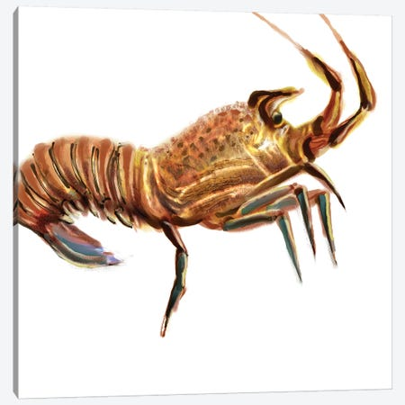 Illustrated Lobster II Canvas Print #NOV7} by Rick Novak Art Print