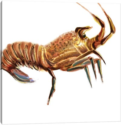 Illustrated Lobster II Canvas Art Print