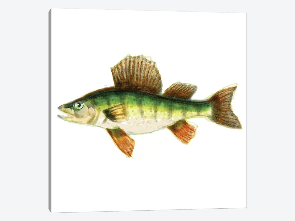 Illustrated Yellow Perch by Rick Novak 1-piece Canvas Wall Art