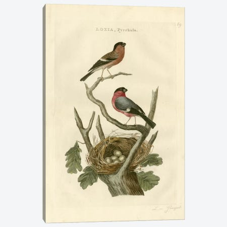 Nozeman Birds & Nests I Canvas Print #NOZ2} by Nozeman Canvas Art