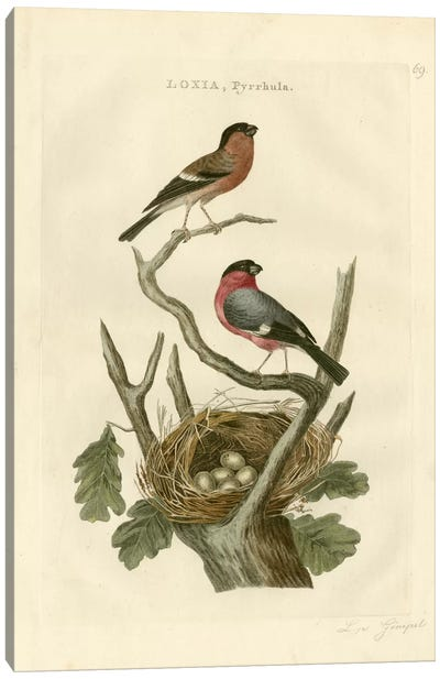 Nozeman Birds & Nests I Canvas Art Print