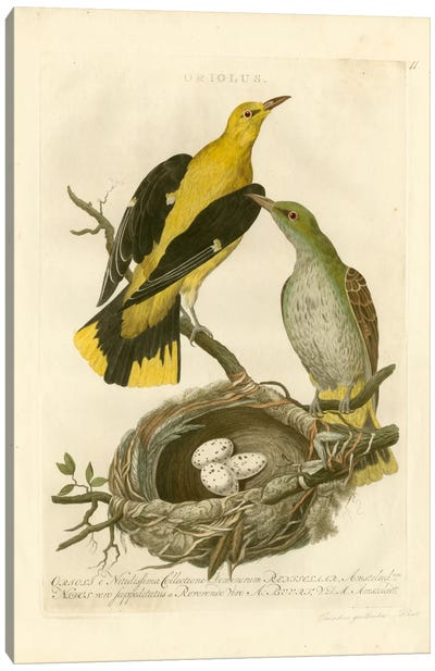 Nozeman Birds & Nests II Canvas Art Print