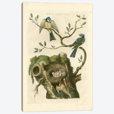 Nozeman Birds & Nests III Canvas Print #NOZ4} by Nozeman Canvas Art Print