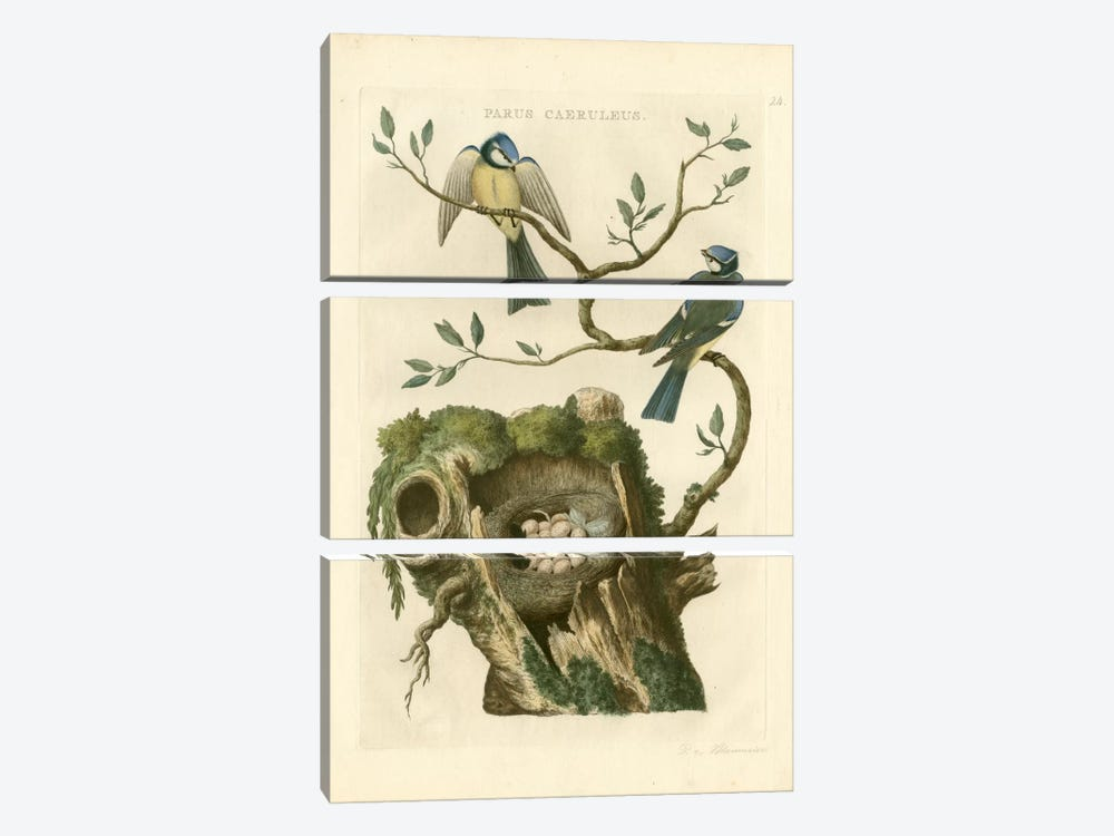 Nozeman Birds & Nests III by Nozeman 3-piece Canvas Wall Art