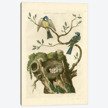 Nozeman Birds & Nests III Canvas Print #NOZ4} by Nozeman Canvas Art Print