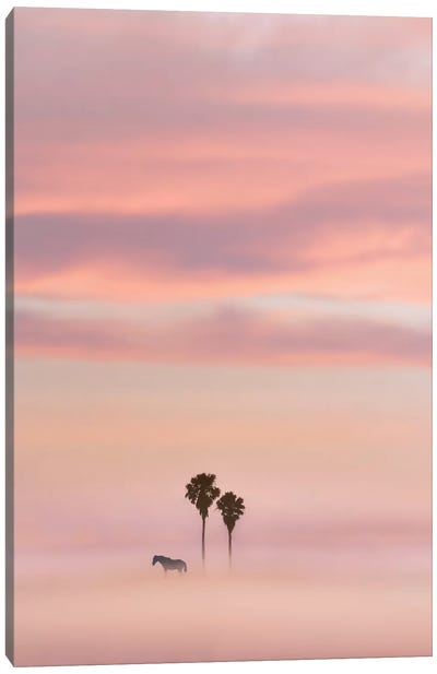 Just Another Sunset Canvas Art Print