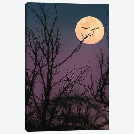 Moon Night Canvas Print #NPH34} by Nirs Photography Canvas Art Print