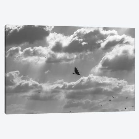 Soaring High Canvas Print #NPH55} by Nirs Photography Canvas Print