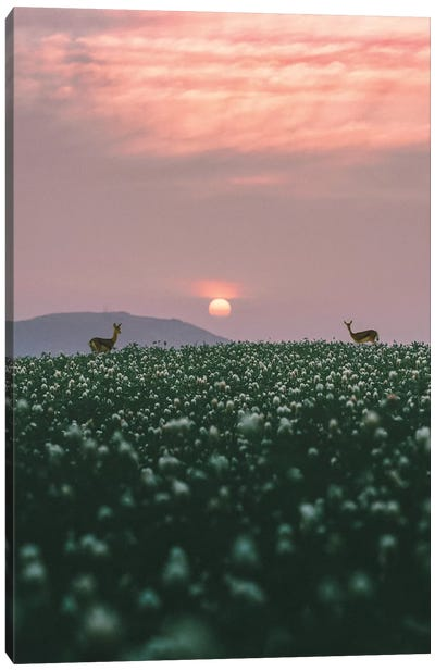 Behind The Grass Canvas Art Print