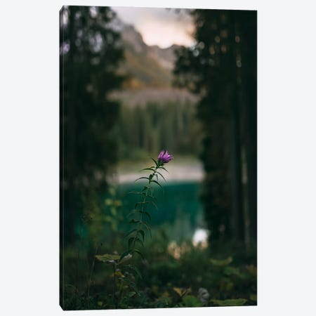 Carezza Flower Canvas Print #NPH75} by Nirs Photography Canvas Print