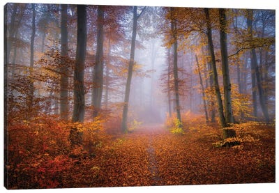 October Trail Canvas Art Print