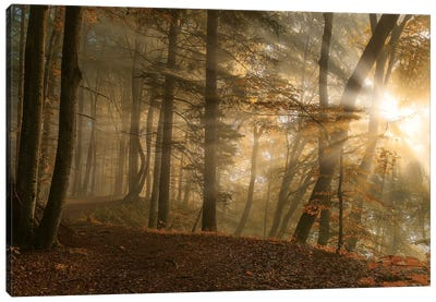Forest Light Canvas Art Print