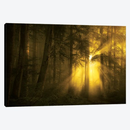 Yellow Canvas Print #NRB2} by Norbert Maier Canvas Art