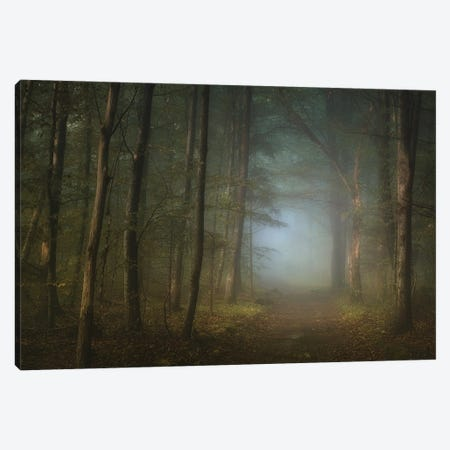 Forest Pathway Canvas Print #NRB8} by Norbert Maier Canvas Art