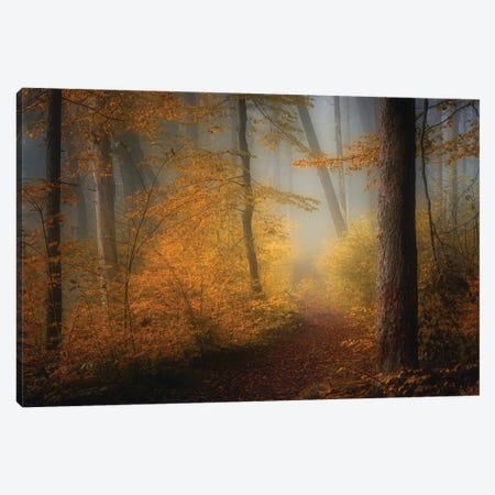 In Autumn Canvas Print #NRB9} by Norbert Maier Canvas Wall Art