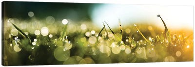 Dew Over A Grass On The Morning Canvas Art Print