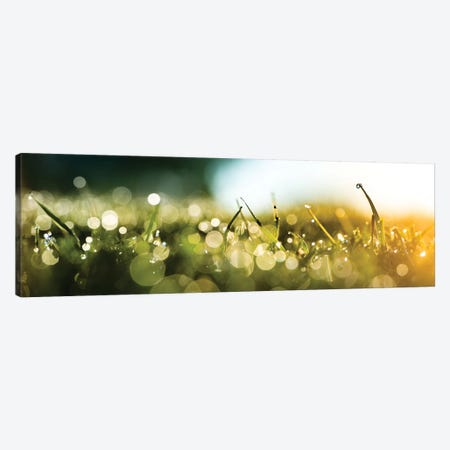 Dew Over A Grass On The Morning Canvas Print #NRV100} by Nik Rave Canvas Print