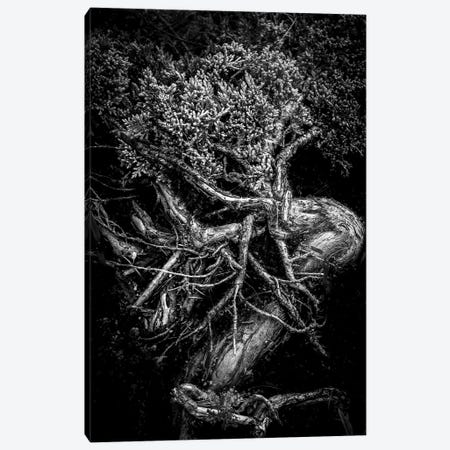 Unity Of Souls In Black And White Canvas Print #NRV103} by Nik Rave Art Print