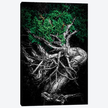 Unity Of Souls Green Canvas Print #NRV107} by Nik Rave Canvas Wall Art