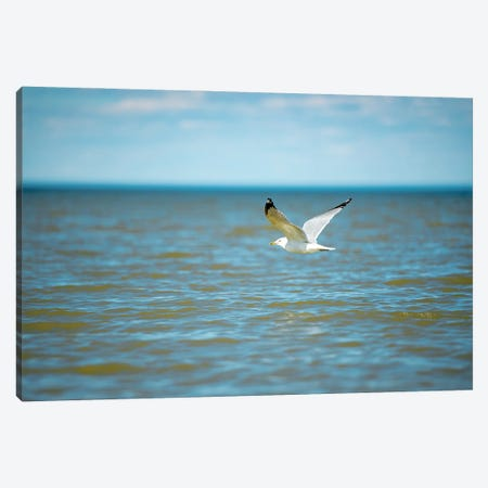Seagull On Over The Sea Canvas Print #NRV109} by Nik Rave Art Print