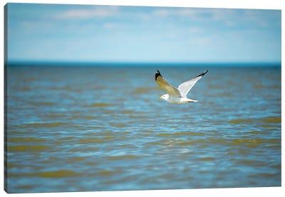 Seagull On Over The Sea Canvas Art Print