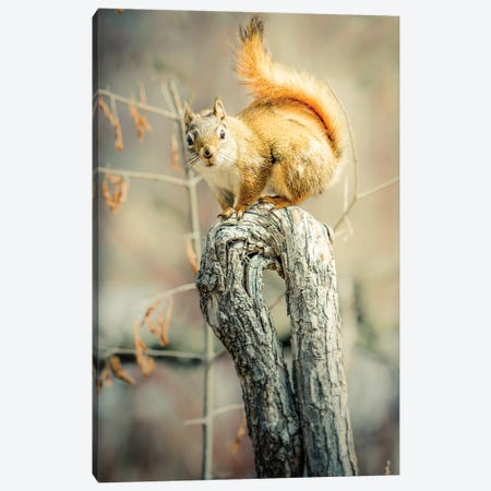 Squirrel On Curved Branch Canvas Print #NRV10} by Nik Rave Canvas Print
