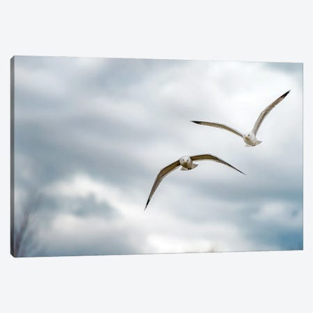 Two Seagulls Flying Forward Over Lake Canvas Print #NRV115} by Nik Rave Art Print