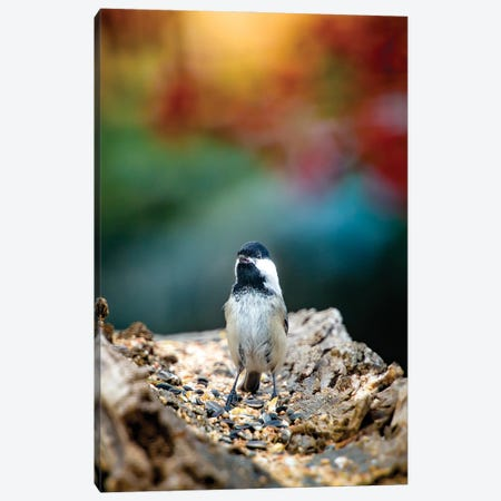Bird Beautifully Lit On The Morning Canvas Print #NRV117} by Nik Rave Canvas Print