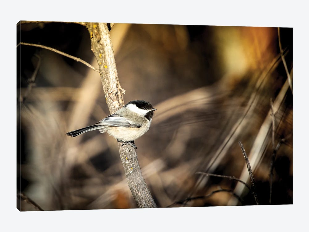 Bird On The Bench by Nik Rave 1-piece Canvas Wall Art