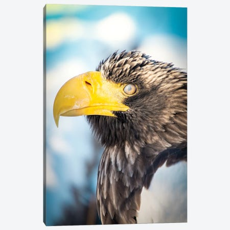 Blinking Bald Eagle Portrait 3-Piece Canvas #NRV119} by Nik Rave Canvas Art