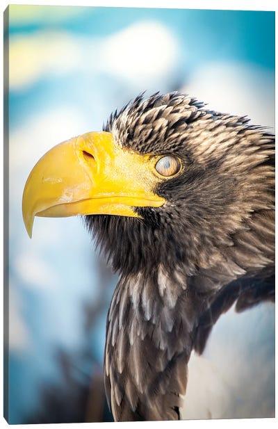 Blinking Bald Eagle Portrait Canvas Art Print