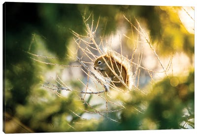 Squirrel Surrounded By Blurred Branches Canvas Art Print