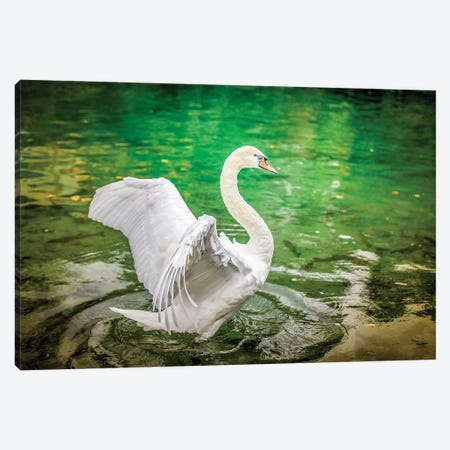 Dancing White Swan On A Lake Canvas Print #NRV124} by Nik Rave Canvas Wall Art