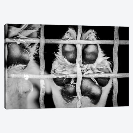 Paw Of A Dog In A Cage Canvas Print #NRV125} by Nik Rave Canvas Artwork