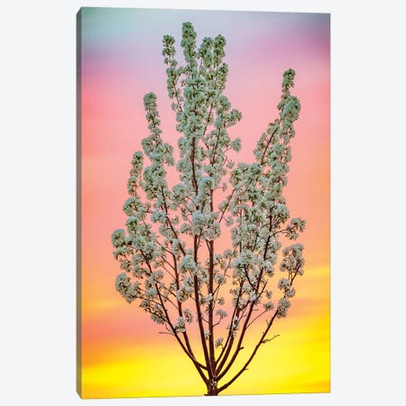 Backlit Blooming Tree In Light Of Summer Sky Canvas Print #NRV127} by Nik Rave Canvas Art